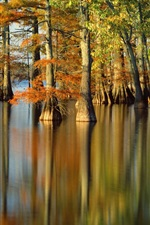 Autumn, trees, river, water reflection