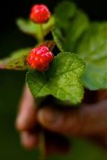 Preview iPhone wallpaper Berries, cloudberries, bokeh