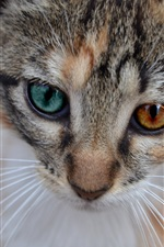 Preview iPhone wallpaper Cat face, whiskers, bokeh