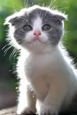 Preview iPhone wallpaper Cute kitten, furry cat