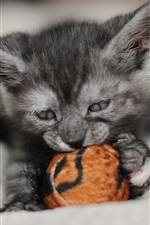 Preview iPhone wallpaper Cute kitten play toy