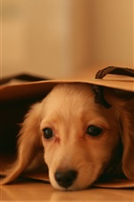 Preview iPhone wallpaper Cute puppy, lying, paper bag