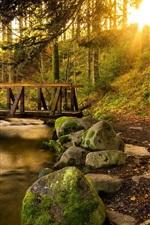 Floresta, árvores, angra, fuga, ponte, pedras, raios de sol