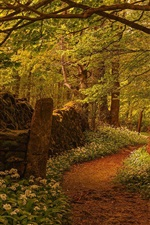 Preview iPhone wallpaper Forest, trees, footpath, flowers, fence, England
