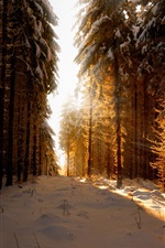 Preview iPhone wallpaper Germany, winter, snow, forest, sun rays