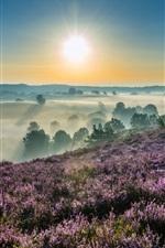 Preview iPhone wallpaper Hoge Veluwe National Park, Gelderland, Netherlands, dawn, sunrise, fog
