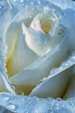 Preview iPhone wallpaper Light blue rose, petals, water drops, dew
