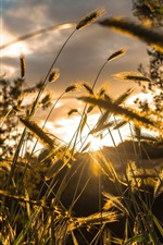 Preview iPhone wallpaper Light, grass, bokeh, sun