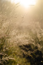 Morning, sunlight, grass