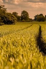 Vorschau des iPhone Hintergrundbilder Natur, Feld, Abenddämmerung, wolken, bäume, frühling