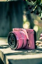 미리보기 iPhone 배경 화면 니콘 카메라, 핑크, 꽃