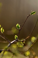 Preview iPhone wallpaper Plant buds, spring, bokeh