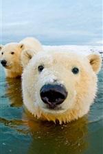 미리보기 iPhone 배경 화면 북극곰, 북극, 하늘, 바다