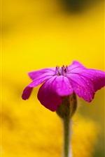 Purple flower, yellow background, blur