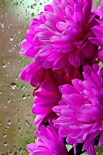 Preview iPhone wallpaper Purple flowers, glass, water drops