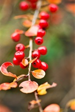 Preview iPhone wallpaper Red berries, yellow leaves, autumn, bokeh