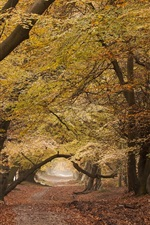 Preview iPhone wallpaper Road, trees, autumn, nature scenery