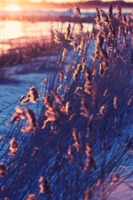 Preview iPhone wallpaper Snow, grass, morning, sunrise
