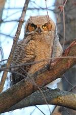 Preview iPhone wallpaper Tree, owl, bird