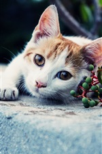 Preview iPhone wallpaper White brown cat, look, green berries