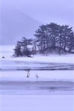 Winter snow, lake, islands, trees, ice, fog