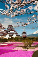 Preview iPhone wallpaper Aizuwakamatsu Castle, Fukushima, Japan, cherry flowers, park