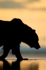 Preview iPhone wallpaper Alaska, bear, sunset, silhouette