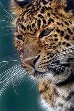 Preview iPhone wallpaper Animal portrait, jaguar, mustache