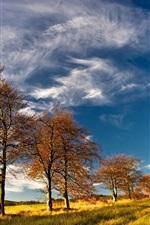 Autumn, trees, grass, sky, clouds