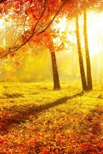 Preview iPhone wallpaper Beautiful autumn, forest, trees, red leaves, grass, sun rays