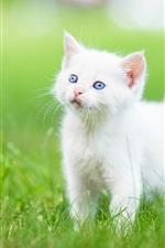 Preview iPhone wallpaper Blue eyes white kitten, grass