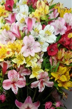 Colorful alstroemeria, bouquet, flowers