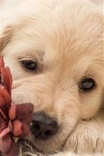 Cão e flor