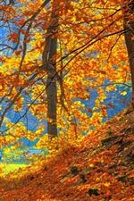 Floresta, árvores, folhas vermelhas, chão, outono