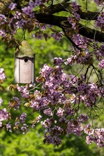 Preview iPhone wallpaper Garden, spring, cherry flowers