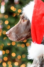 Preview iPhone wallpaper German Shorthair dog, red hat, Christmas, glare