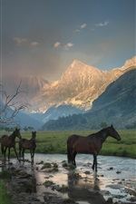 Preview iPhone wallpaper Mountains, canyon, mist, stream, grass, horse