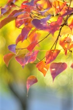 Preview iPhone wallpaper Nature, branch, red leaves, autumn, blur