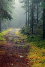 Preview iPhone wallpaper Nature landscape, forest, trees, road, mist
