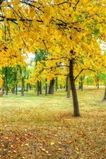 Preview iPhone wallpaper Park, trees, yellow leaves, grass, autumn