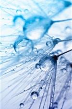 Close-up, gotas da água, azul plantas