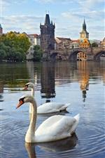 Preview iPhone wallpaper Prague, Czech Republic, Charles bridge, river, houses, Vltava, swans
