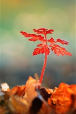 Preview iPhone wallpaper Red plant leaves, ladybug, glare