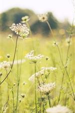 Preview iPhone wallpaper Summer, grass, flowers