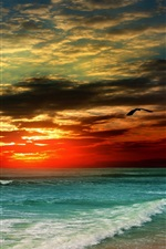 Preview iPhone wallpaper Sunset, beach, sea, waves, tropical, clouds, bird