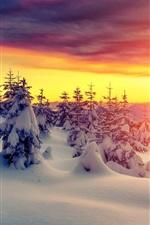 미리보기 iPhone 배경 화면 일몰, 겨울, 두꺼운 눈, 나무