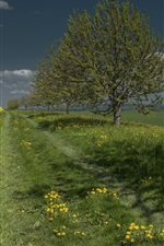 Preview iPhone wallpaper Trees, field, grass, rape flowers, dandelion, clouds
