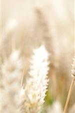 Preview iPhone wallpaper Wheat field, bokeh