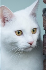 Preview iPhone wallpaper White cat, look, yellow eyes