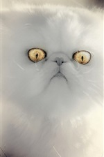 Preview iPhone wallpaper White kitten, yellow eyes, furry